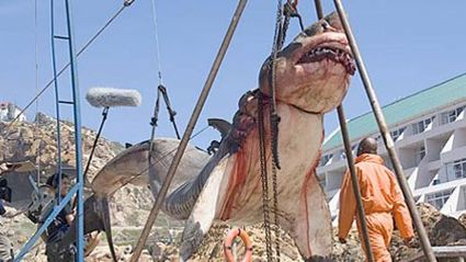 15 tonne prehistoric shark captured off the coast of Pakistan