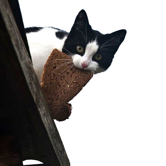 Cat Thief Funny Animal Pictures 6 605