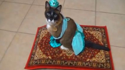 Cat Dresses As Princess Jasmine, Rides Magic Carpet-Roomba.