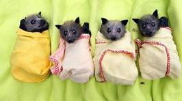 Cute Animal Burritos