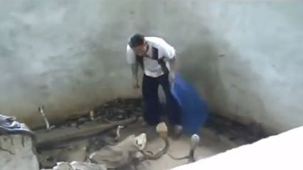 How to make a cobra behave... (OMG!)