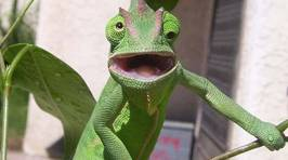 Animals Caught Making Ridiculous Faces