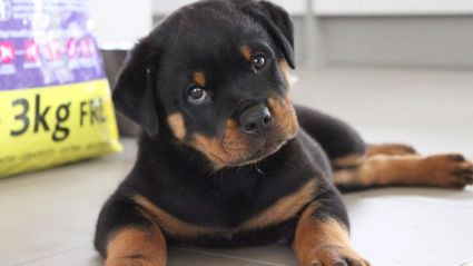 Cutest Pet Top 10 Photos