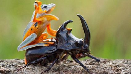 PICS: Tiny Frog catches a ride