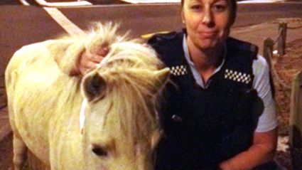 LISTEN AGAIN: Horse goes for a midnight stroll
