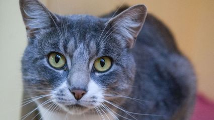 These Adorable Cats Are Up For Adoption At The Otago SPCA