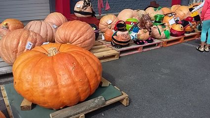 PHOTOS: Mitre 10 Pumpkin Festival 2016