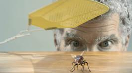 Cheap, easy life hacks guaranteed to repel flies