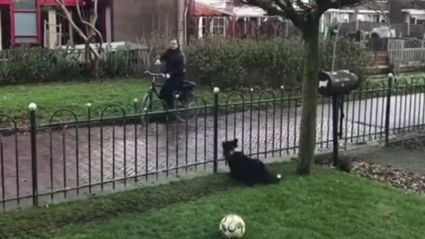 This dog has the most creative way to make strangers play fetch with her