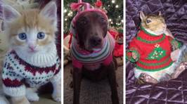 These animals wearing Christmas jumpers are too cute