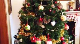 Cats helping decorate Christmas trees
