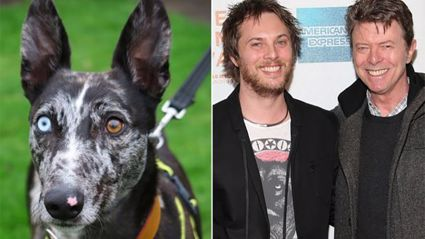 Dog with odd colour eyes gets a new home thanks to David Bowie's kindhearted son