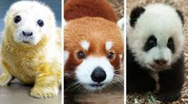 Zoos get into Twitter battle over who has the most adorable animal
