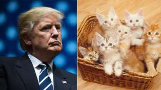 Sick of Trump already? Turn pictures of him into kittens with this Chrome extension