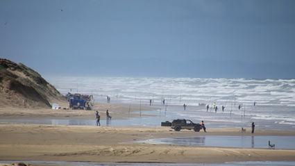 Snapper bonanza on 90 Mile Beach