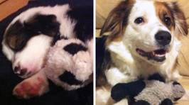 These pets may be all grown up but they still love their childhood toys