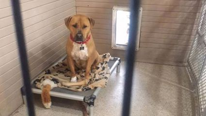 No one will adopt this sad pooch and no one understands why