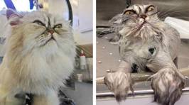 Owners share hilarious pics of pets before and after bathtime