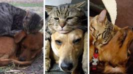 These adorable cats ditch their beds to curl up with their canine pals