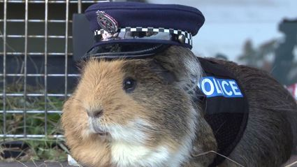 Flynny's eulogy for Constable Elliot the crime fighting guinea pig