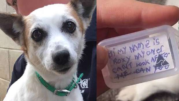 Roxy was found in the Howick area wearing this tag. Photo / Facebook