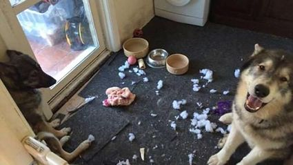 Owners share hilarious photos of their adorable pets behaving badly