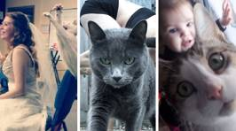 These hilarious snaps of photobombing cats will make your day