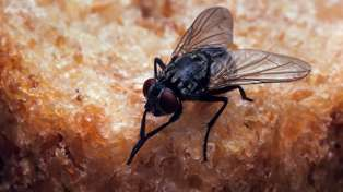 The disgusting truth behind what really happens when a fly lands on your food