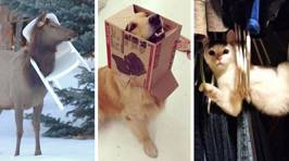 Owners snap their pets caught in very precarious places and it's too funny