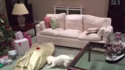 Owner wrapped himself up as a present for his dog and the pup's reaction is priceless!
