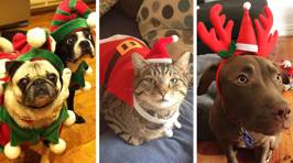 These pets don't care that it's Christmas and it's absolutely hilarious