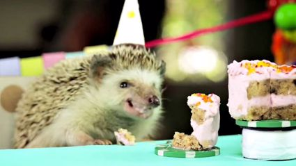 Tiny Birthday Cake for a Tiny Hedgehog