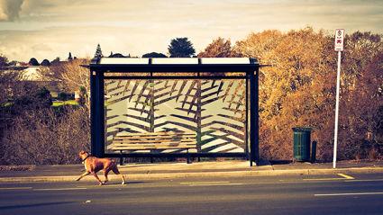 Mystery 'pooper' targets Waikato bus stop
