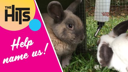 Help us name newsreader Ash's new bunnies!