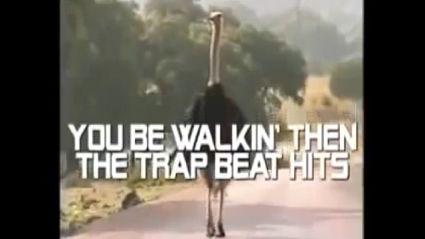 Ostrich blows your mind!