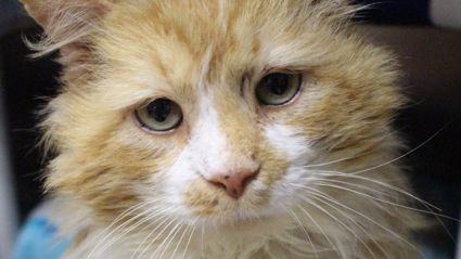 This story of cat who walked 19km to get back to family who abandoned him will break your heart!