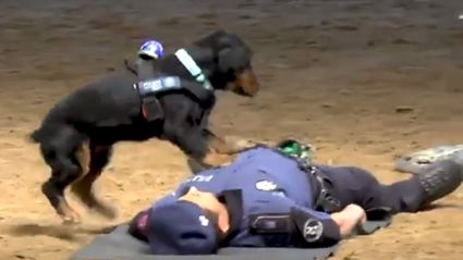 This heartwarming video of a dog performing CPR on a 'collapsed' police officer is the best thing you'll see all day!