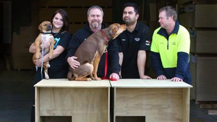 Ruakākā Dog Rescue call sees kennels made for needy dogs