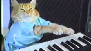 Here are the 10 best cat videos on the internet!