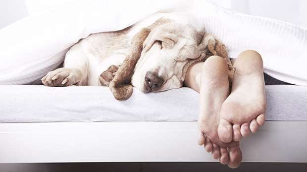 Here's why letting your dog sleep with you in bed every