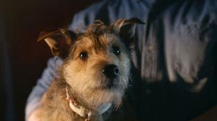 Photo / Pet Refuge