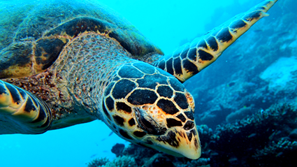 A resort in the Maldives wants to hire you to look after turtles!