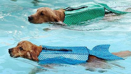 You can turn your dog into a mermaid with this adorable new life jacket