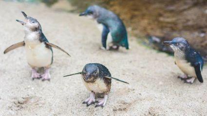 Photo / National Aquarium of New Zealand via Facebook