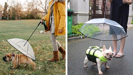 If you have a pooch who hates the rain, good news: Dog umbrellas now exist