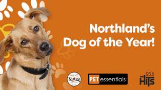 Northland's Dog of the Year
