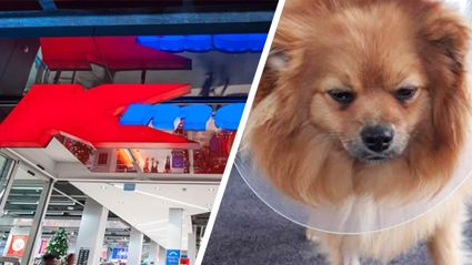 Kiwi woman's warning to pet owners after $5 Kmart chew toy almost kills her puppy