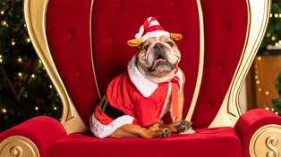 It turns out you can take your dog to meet Santa this Christmas and it sounds adorable