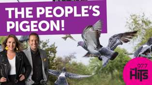 The People's Pigeon