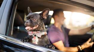 Calling all animal-lovers! Uber Pets launches in New Zealand TOMORROW